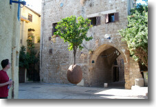 Hanging Tree in Jaffa, Israel